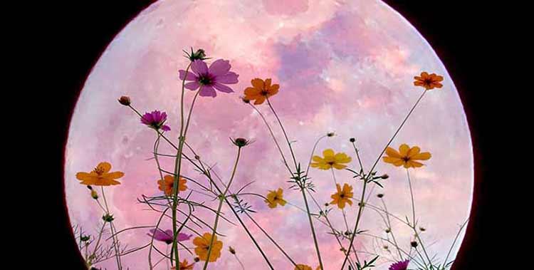 Flower Moon Moon Giant Image Two